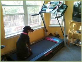 cardio endurance training